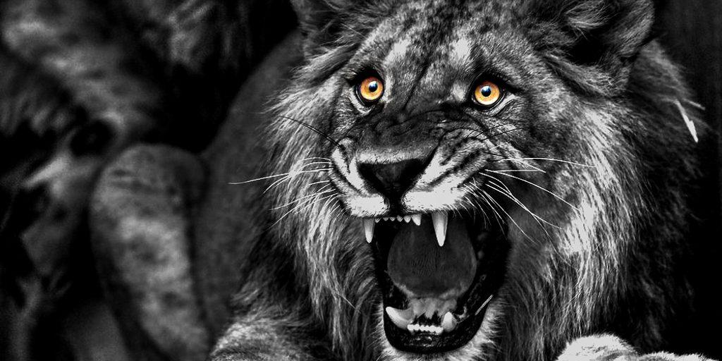 Bestech Lion